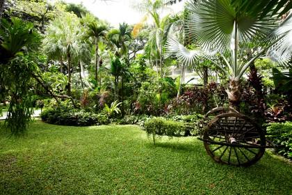 Hi_ARIV_43418935_Tropical_garden